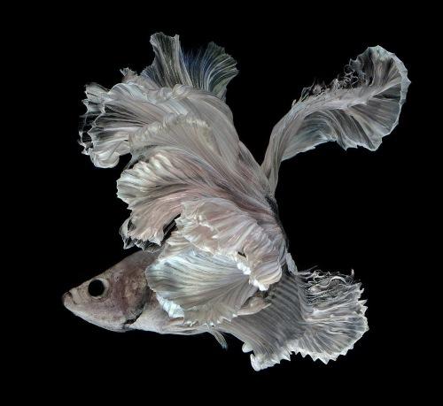 fish-10[1]
