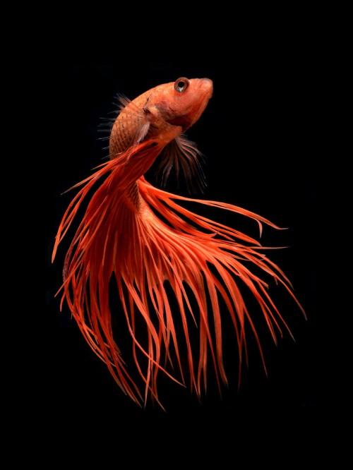 fish-1[1]