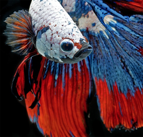 fish-2[1]