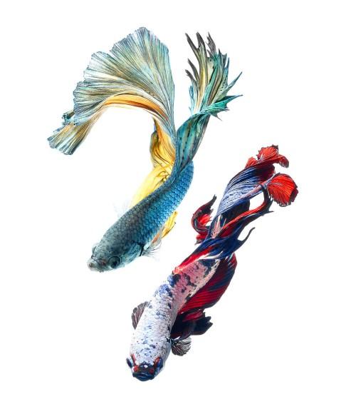 fish-3[1]