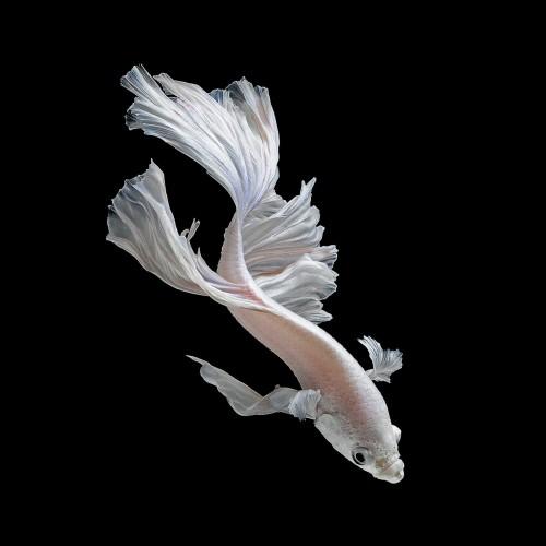 fish-4[1]