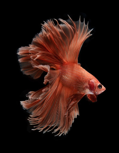 fish-5[1]