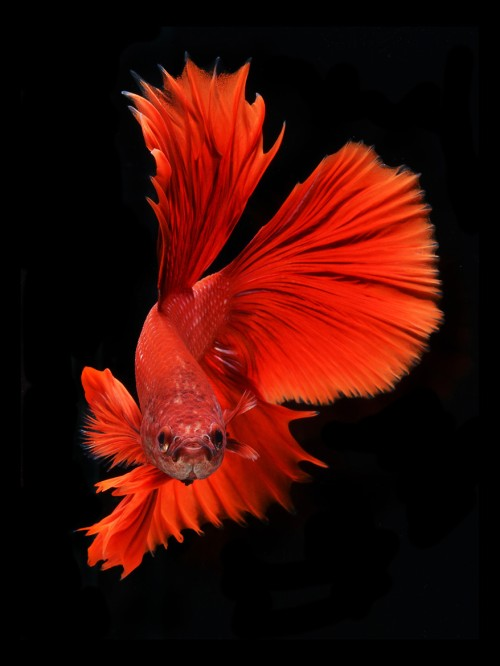 fish-6[1]