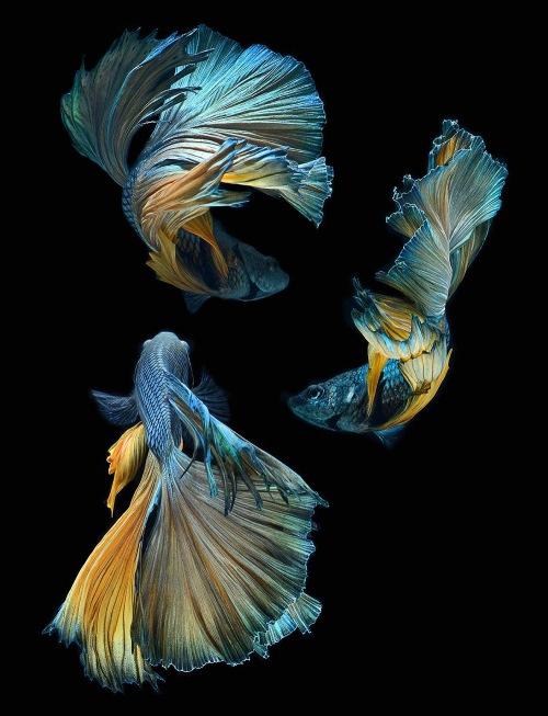 fish-9[1]